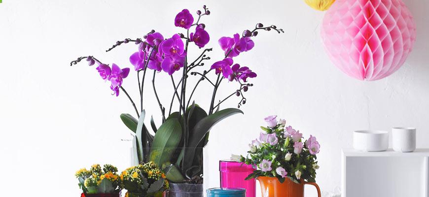 Orchideen – Tipps für die volle Blütenpracht!
