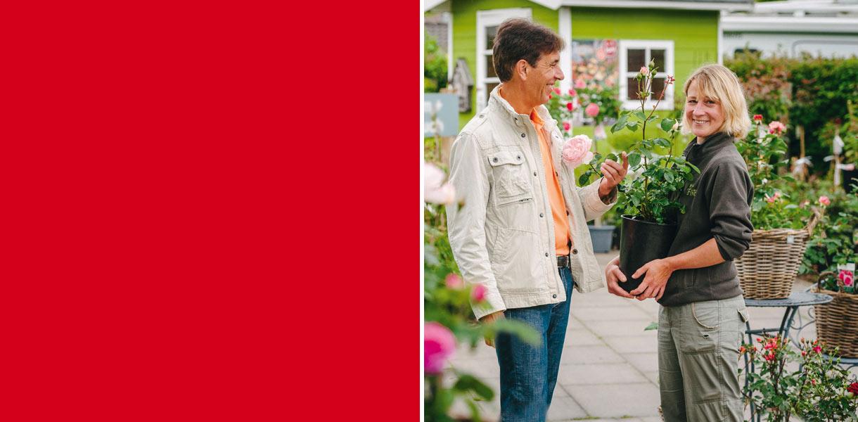 Rosenmonat Juni in Ihrer Gärtnerei Finder in Sasel