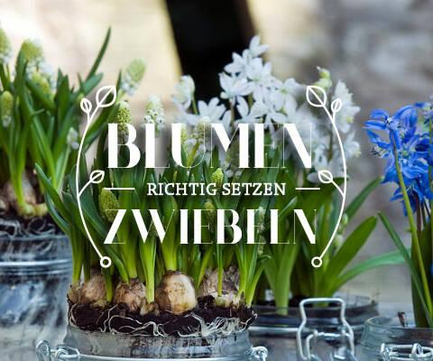 Jetzt (noch) Blumenzwiebeln pflanzen?