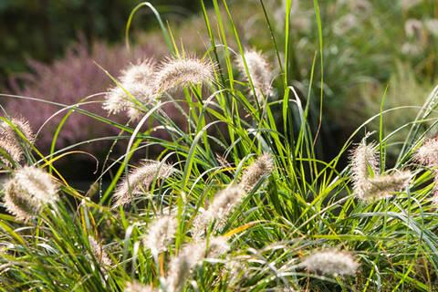 Gräser – natürlich und modern